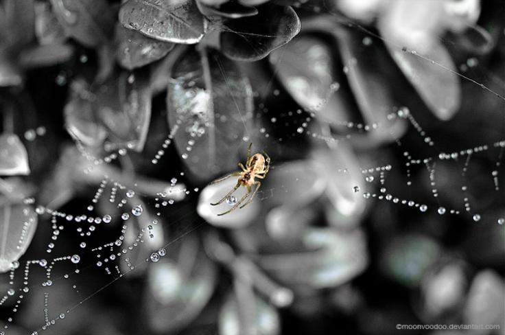SpiderPearls by MoonVooDoo