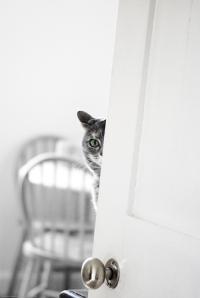 insidecat_by_moonvoodoo-d5t4iyt