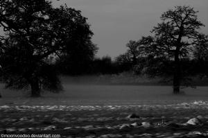 MistTrees by MoonVooDoo