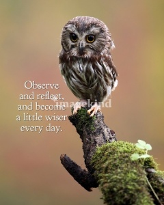 observe and reflect