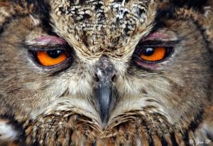 owlby Yair-Leibovich