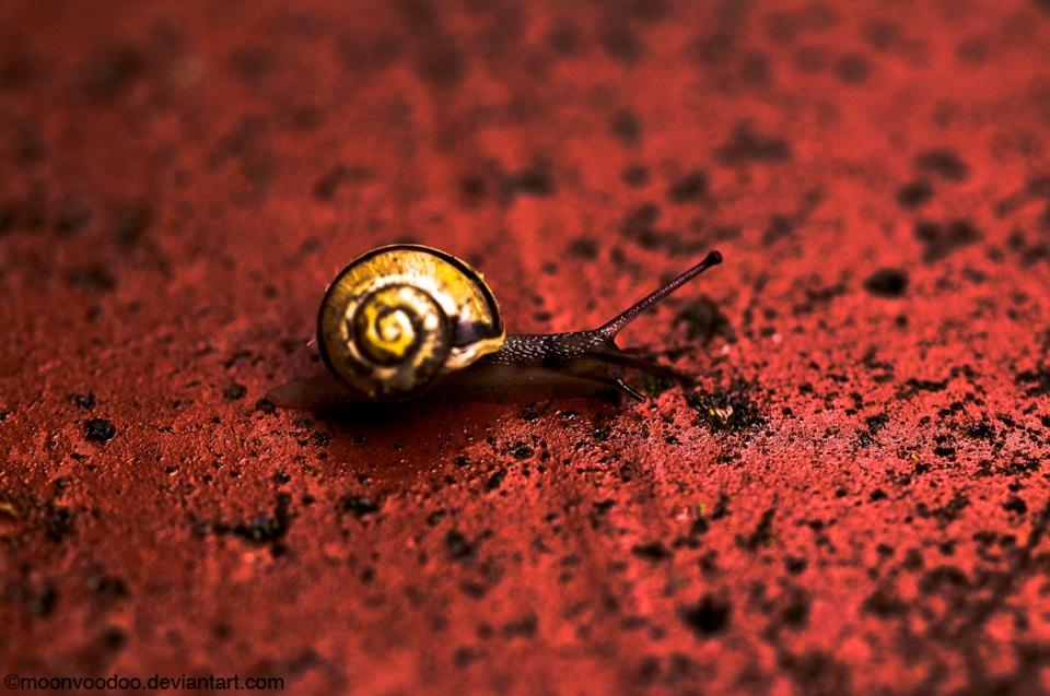 SnailPace