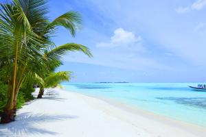 lush beach