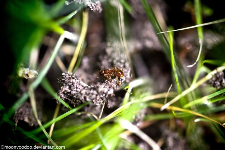 ANT-onym