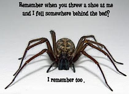 scorpio spider
