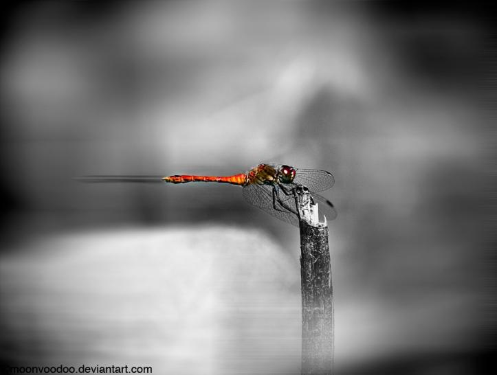 RedDragon