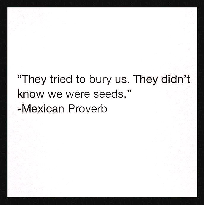 mexican proverb - seeds