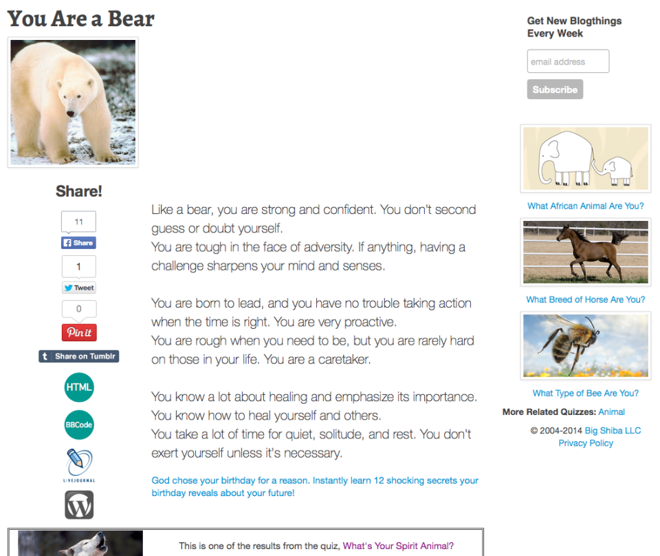 You are a Bear