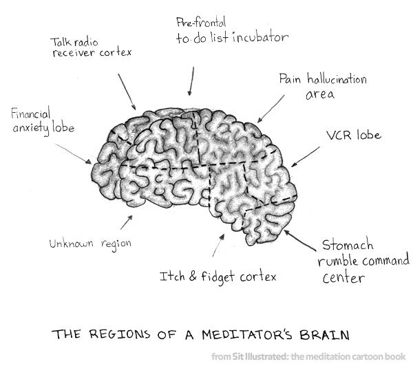 meditator's brain by Sit Illustrated