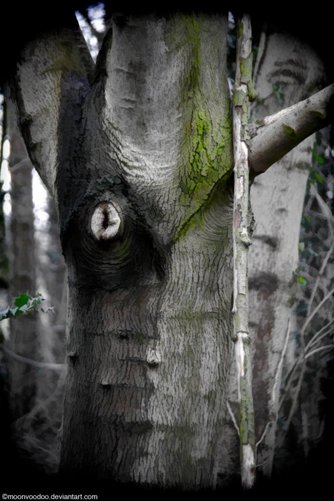 TreeOwl