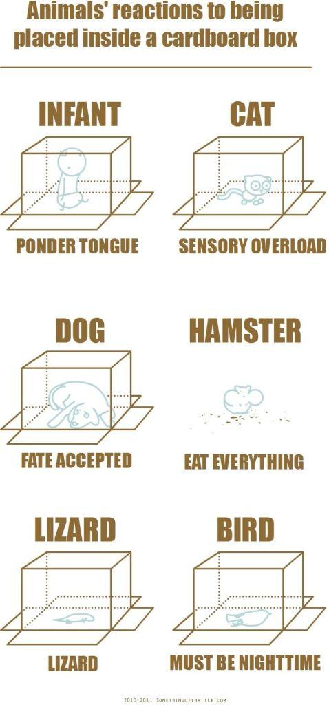 cardboard box test