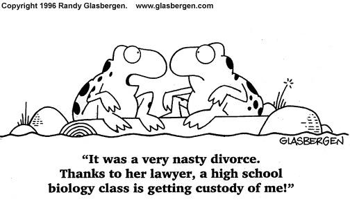 divorce:custody sick humor