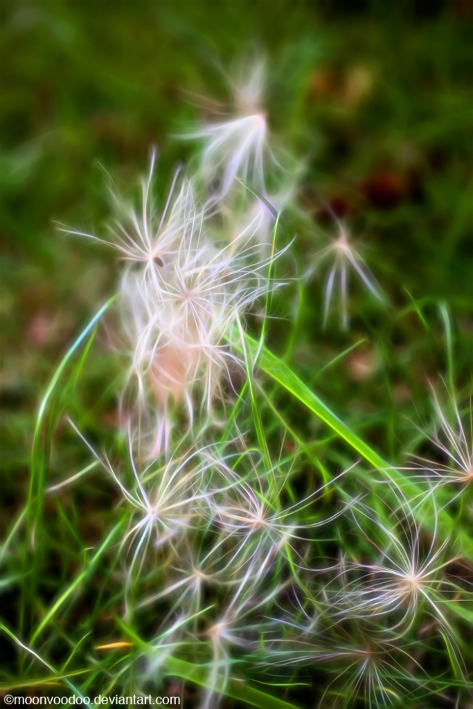 Thistle cluster grass