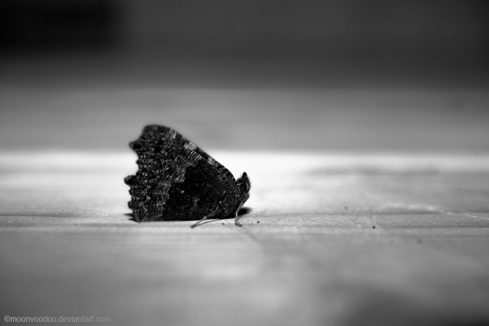 Hibernating butterfly