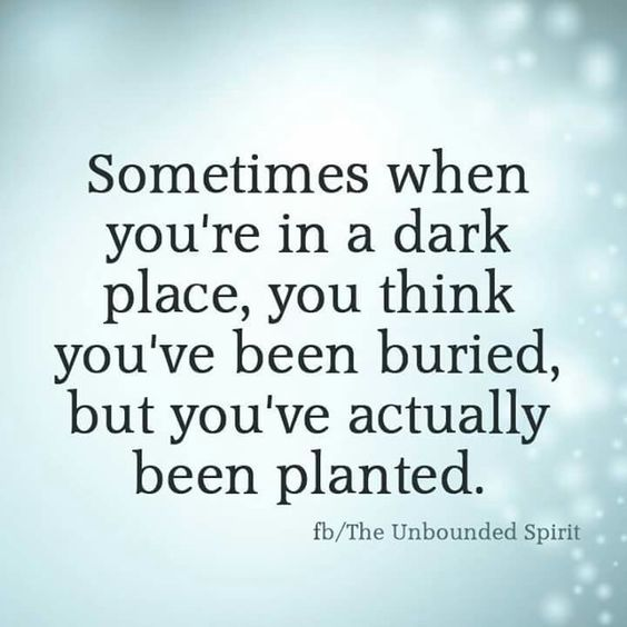 planted in a dark place