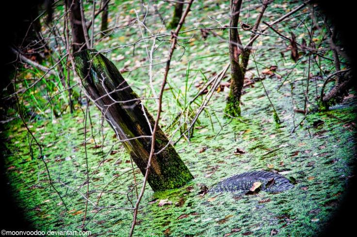 tire-alligator